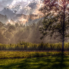 After the Rain by Jason Swint - Landscapes Prairies, Meadows & Fields ( grassy field, locust tree, tree, blackberry field, black locust, ray of light, landscape, rays )