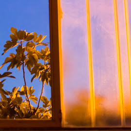 Window at blue hour by Cesare Morganti - Abstract Light Painting ( light painting, window, blue hour, nature up close, fig tree )