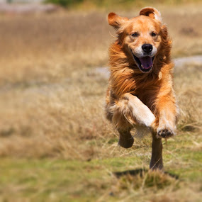 I am coming!!! by Alfredo Garciaferro Macchia - Animals - Dogs Running