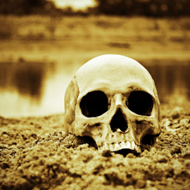 by Jeffrey T Johnson - Novices Only Objects & Still Life ( skull, old, life, black and white, death, dark )