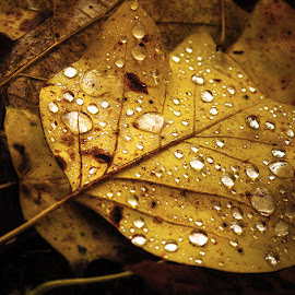 Autumn Remembrance pt.IV. by Zsolt Zsigmond - Nature Up Close Leaves & Grasses ( autumn, fall, drops, brown, leaf )