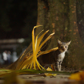 Ready or not, I'm coming! by Yosua Ardian - Animals - Cats Kittens