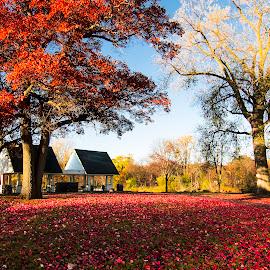 by Bonnie Filipkowski - City,  Street & Park  City Parks (  )