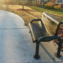 Park Bench in Morning Light  by Kathy Rose Willis - City,  Street & Park  City Parks ( nature, park, bench, relax, green, florida, brown, enjoy, gray )