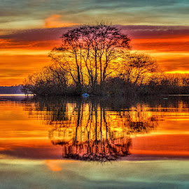 Mirror by Jesus Rivero - Landscapes Waterscapes ( orange, toxic, lake, illusions, germany )