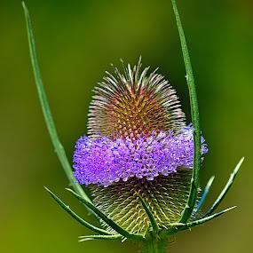 by Nikša Šapro - Nature Up Close Other plants
