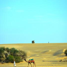 Love to ride by Kaushik Dutta - Landscapes Deserts ( desserts, camel, nature, path, professional people, dessert )
