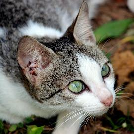 by Thapasya Vijayan - Animals - Cats Portraits