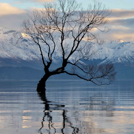 Lonely Tree by Winkie Chau - Nature Up Close Trees & Bushes ( dawn, tree, lake, refection, snowy mountain,  )