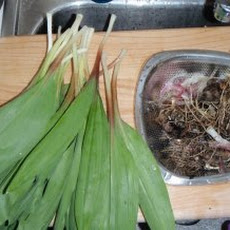 Spicy Pickled Ramps Recipe