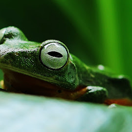 by Indah Miniarti - Animals Amphibians