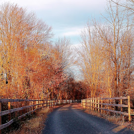 Autumn Dissipation  by Stephanie Sywensky - Nature Up Close Trees & Bushes ( clouds, fence, sky, pathway, colorful, autumn, path, trees, leaves, photography )