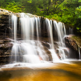 Wentworth Falls by Hilton Luke - Landscapes Waterscapes ( water, waterfalls, waterscape, waterfall, rock, landscape, waterscapes, nature, trees, long exposure, blue mountains, rocks, light )