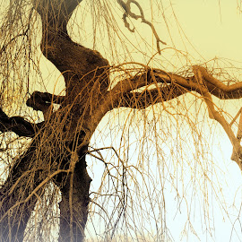 Reach  out by Gordon Simpson - Nature Up Close Trees & Bushes