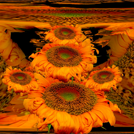 Sunflowers 5 by Tina Dare - Digital Art Abstract ( abstract, browns, patterns, yellows, designs, sunflowers, framed, illustration, flowers, ambers, curves, shapes )