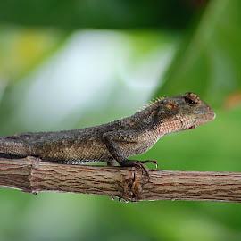 Kadal by Gusti Ngurah Wahyu Wibowo - Animals Reptiles ( macro, animals, reptile, photography )