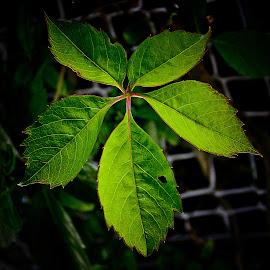 leaf up close  by Magdalena Wysoczanska - Nature Up Close Leaves & Grasses ( wysoczanska, nature, magdalena, green, nature up close, leaf )