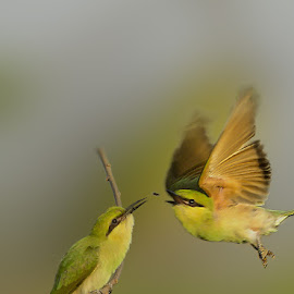 Lts see who win.. by Mukesh Chand Garg - Animals Birds (  )