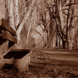 Lonely Bench by Josh Hadley - City,  Street & Park  City Parks