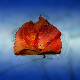 Season's End by Liz Crono - Nature Up Close Leaves & Grasses ( water, pool, autumn, colors, leaf, fall, color, colorful, nature )
