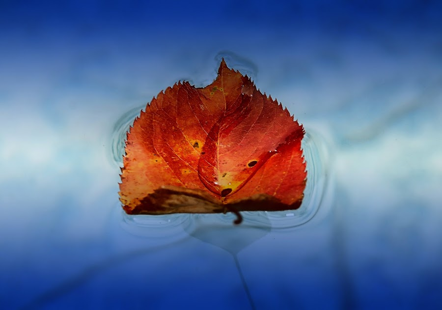 Season's End by Liz Crono - Nature Up Close Leaves & Grasses ( water, fall leaves on ground, nature, colorful, color, autumn, pool, colors, fall, leaf )