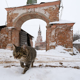 Christmas cat ... by Unknown - Animals - Cats Kittens ( cat, street, cathedral )