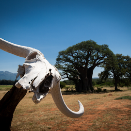 The Skull by Werner Booysen - Landscapes Underwater ( skull, sky, blue sky, tree, south africa, landscape photography, landscape, werner booysen, animal,  )