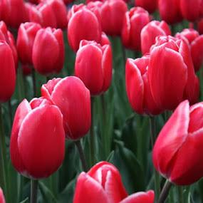 by Kathleen Whalen - Flowers Flower Gardens (  )