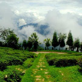 Tea Garden by Shubhi Tyagi - Nature Up Close Gardens & Produce ( clouds, hills, weather, tea, garden )