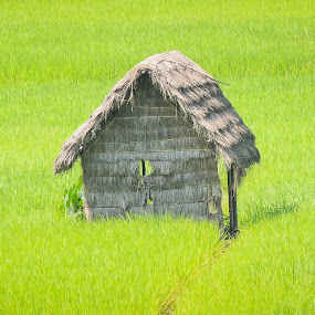 Green House by Topu Saha - Novices Only Landscapes ( planet, bangladesh, nature, green,  )