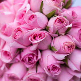 Pink Roses by Giannis Paraschou - Flowers Flower Arangements ( pink roses, pink flowers, flower bouquet, roses, bouquet of roses,  )