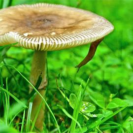 Slug on a mushroom by Tyrell Heaton - Nature Up Close Mushrooms & Fungi ( mushroom, nature, slug, snail,  )