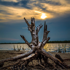 Evening Stump by Chris Parker - Nature Up Close Trees & Bushes ( t3, plant, wildlife, beach, yellow, island, refuge, eos, 32780, brevard, tree, florida, twig, rebel, clouds, water, orange, reflection. color, sand, stump, 1100d, national, beautiful, county, sunset, merritt, river )