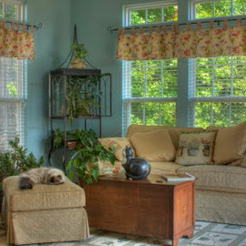 cat napping in morning room by George Holt - Buildings & Architecture Other Interior ( interior, morning room, cat, hdr, nap, plants, windows, sleeping, furniture, sunroom )