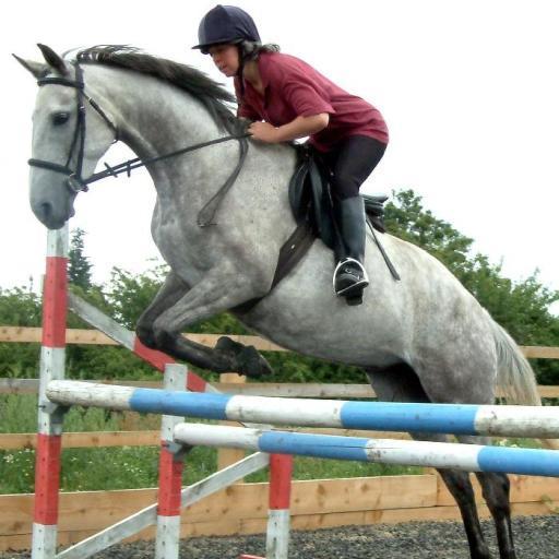 Show Jump Distances for Horses