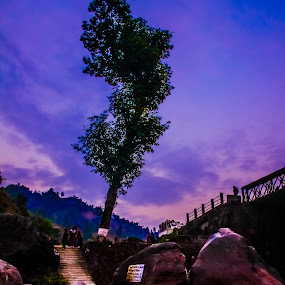 Night Tree. by Soumyaroop  Chatterjee  - Landscapes Prairies, Meadows & Fields ( colour, dooars, nature, landscape, canon 550d )