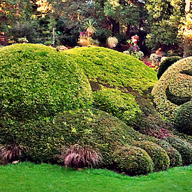 LET ME TAKE A NAP! by Dobrin Anca - City,  Street & Park  City Parks ( unique, park, nantes, green, day,  )