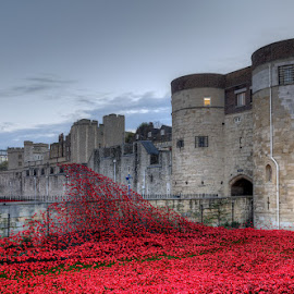 Poppies at Tower of London Sunrise by Bill Green - Buildings & Architecture Public & Historical ( tower of london, ww1, london, poppies. )