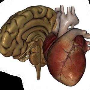Download Organs 3D (Anatomy) APK