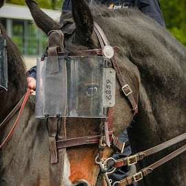 Police Horse by Maria Fetherstone - Animals Horses ( brave, serve, equine, police, horse, riot, protect,  )