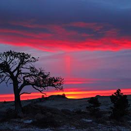 Sunrise Pillar by Kirby Hornbeck - Landscapes Sunsets & Sunrises ( clouds, red, sky, sunrises, sunsets, trees, landscapes )