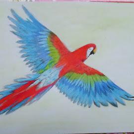 Macaw Catalina by Yongki Wahyu - Drawing All Drawing