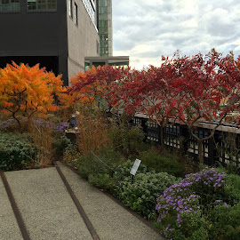Autumn on the Highline by Jared Turner - City,  Street & Park  City Parks