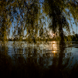 Under the willow by Daniel Ciolac - City,  Street & Park  City Parks ( water, reflection, park, under, mood, reflections, willow, sun, park scene, blu, sky, nature, sundown, mirroring, glitter, black, branches )