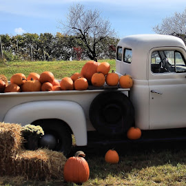 Orchard photo set by Aaron Smith - Novices Only Objects & Still Life ( hay, pumpkins, orchard, old truck, photography )