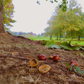 Conkers galore by Ruth Holt - Novices Only Landscapes ( autumn, central park, horse chestnut, scunthorpe, conkers )