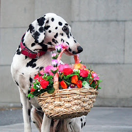 Mimi and shies flowers basket by Vahe Shahinian - Animals - Dogs Portraits ( basket, dog, portrait, flower, animal )
