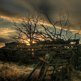 Breaking Through by Eric Demattos - Buildings & Architecture Decaying & Abandoned ( tree, cottage, distant, storm, light, sun, branches, abandoned )