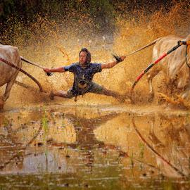 Bull Race by Bambang Pawiroredjo - Sports & Fitness Other Sports