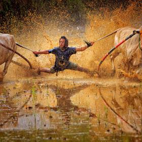Bull-Race.jpg